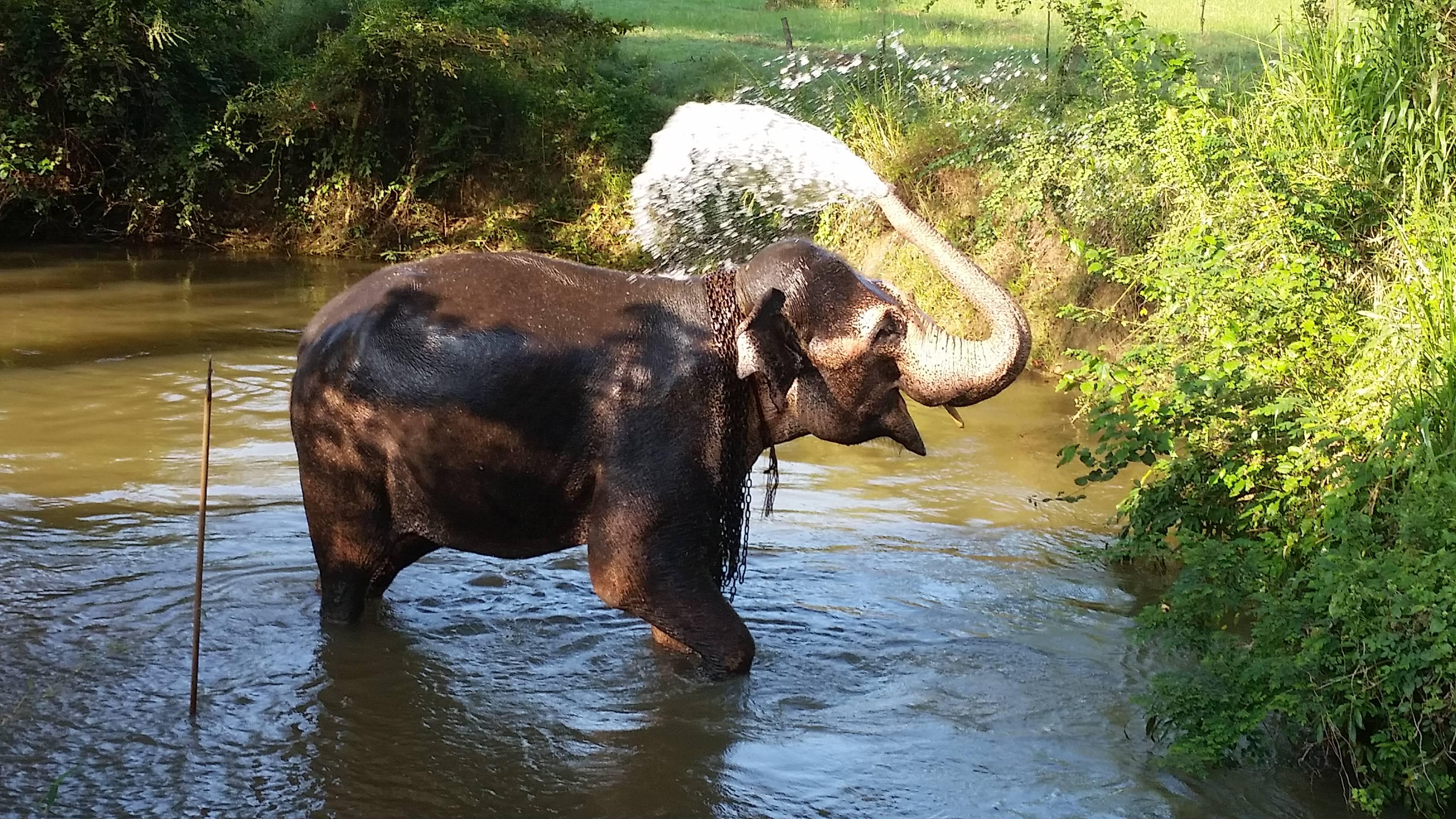 Sri Lanka Travel: Things not to do